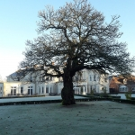 Lime-Tree-Winter-1